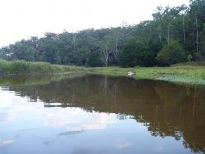 Wheeny Creek near the Colo Riversml