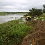 Planting at Bushells