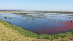 rivo-wetland2